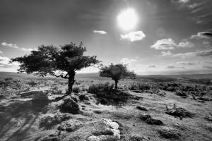 Dartmoor (Dartmoor)